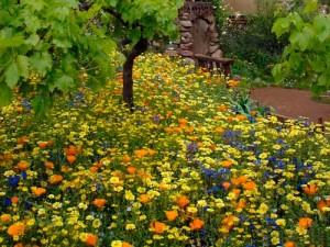 мавританский газон в саду