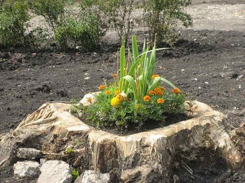 сад огород своими руками применение атлета