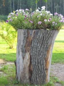 цветочная клумба из пня