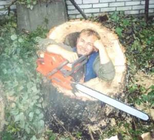спиливание старых деревьев