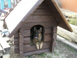 утепленная собачья будка