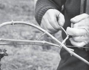 процесс подвязки