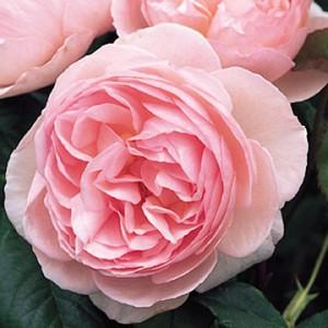 цветок на садовой клумбе
