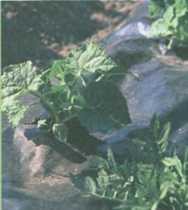 надежная защита растений