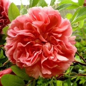 необычная форма цветка