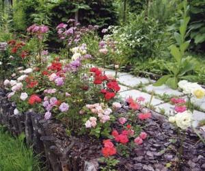 разнообразие оттенков цветков