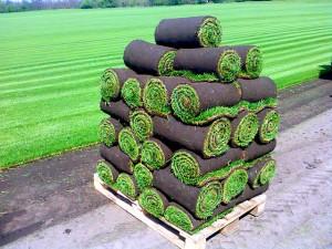 готовый к укладке рулонный газон