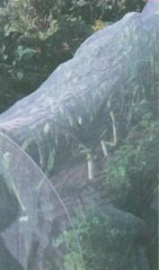 защитная сетка на грядке