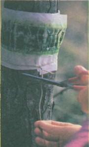 ловушка для насекомых на стволе дерева