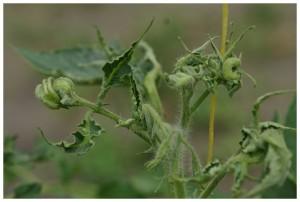 болезнь атаковала растение