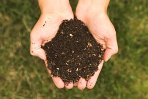 Гумус для удобрения почвы