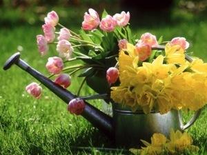 Летний полив растений