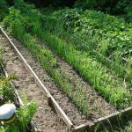 Идея для посадки зелени