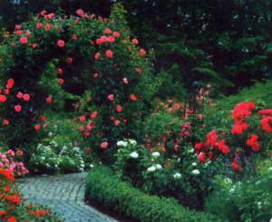 Цветущий сад на загородном участке