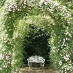 Красивый сад с розами