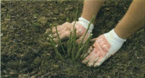 Утрамбовка почвы