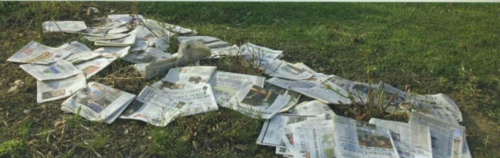 Мульчирование розовых кустов при помощи газет