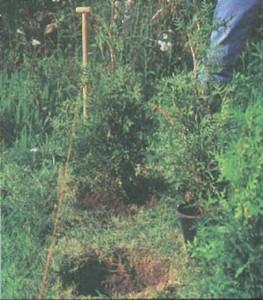 Процесс озеленения участка