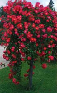Опора для штамбовых роз