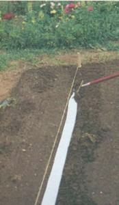 Посевные ленты на грядках
