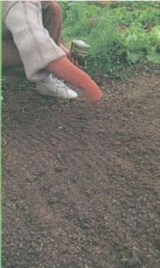 Разбросный посев семян в открытый грунт