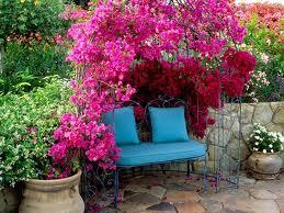 Дачная скамья в тени растений