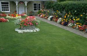 Садовая клумба в цвету