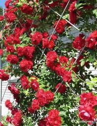 Решетка для вьющихся цветов
