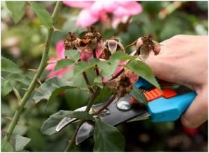 Процесс обрезания цветов