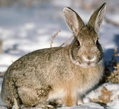 Заяц на садовом участке