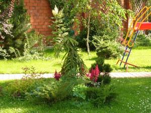 Вариант клумбы с хвойными растениями