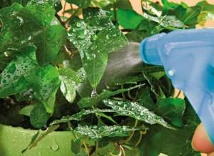 Подкормка растения на даче