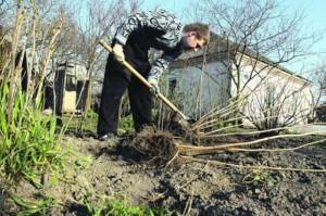 Октябрьские работы на садовом участке
