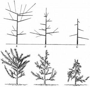 Поддержка равновесия садовых деревьев