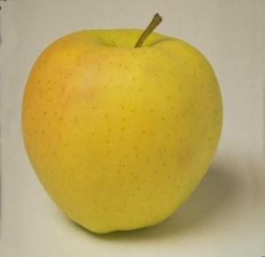 "Яблоко сорта ""Голден делишес"""