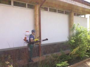Опрыскивание содовых деревьев