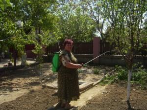 Опрыскивание деревьев на дачном участке