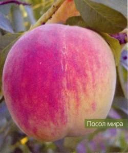 Садовый персик