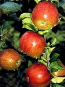 Как прореживание влияет на устойчивость растений к морозам