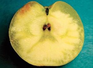 Стекловидность плода