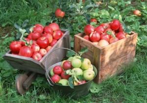 Урожай садовых культур