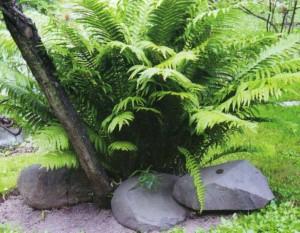 Оформление кустарника при помощи камней