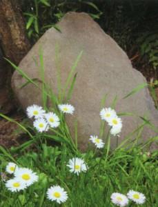 Сочетание валуна и садовых цветов