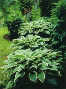 Красивые садовые кустарники