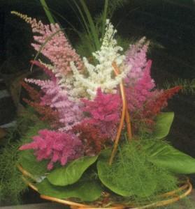 Несколько цветов астильбы в единой композиции