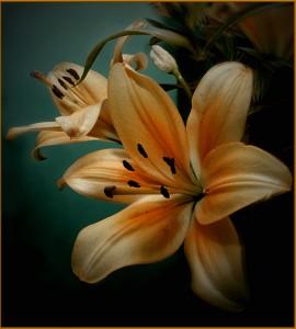Изящные лилии