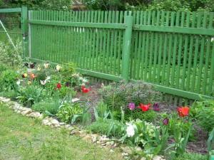 Живой бордюр вдоль садового забора