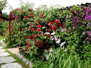 Живая изгородь с цветами