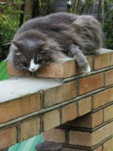Соседский кот пожаловал в гости