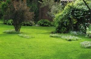 Ухоженный газон